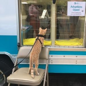 MOBILE ADOPTION EVENT