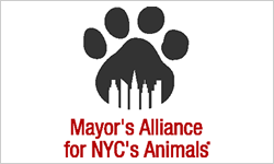 Mayors Alliance