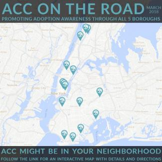 ACC ON THE ROAD