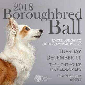 Boroughbred Ball