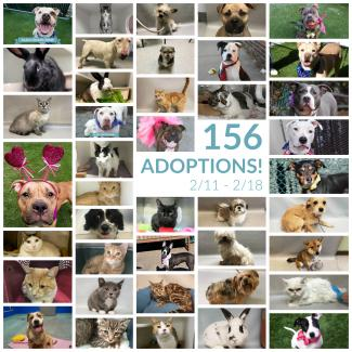 Great Adoptions in February