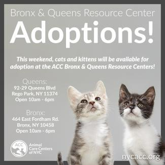 Cat and Kitten adoptions at ACC resource centers