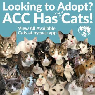ACC Has Cats!