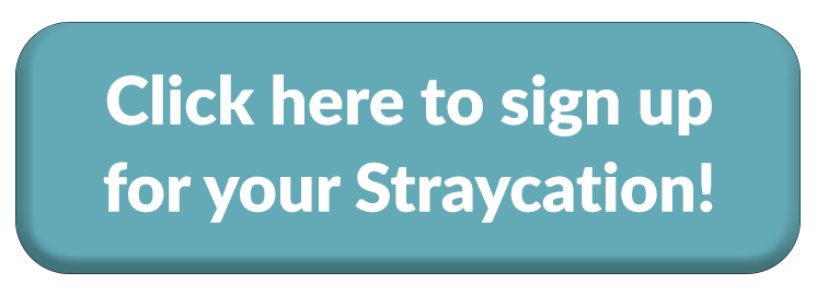straycation button.png