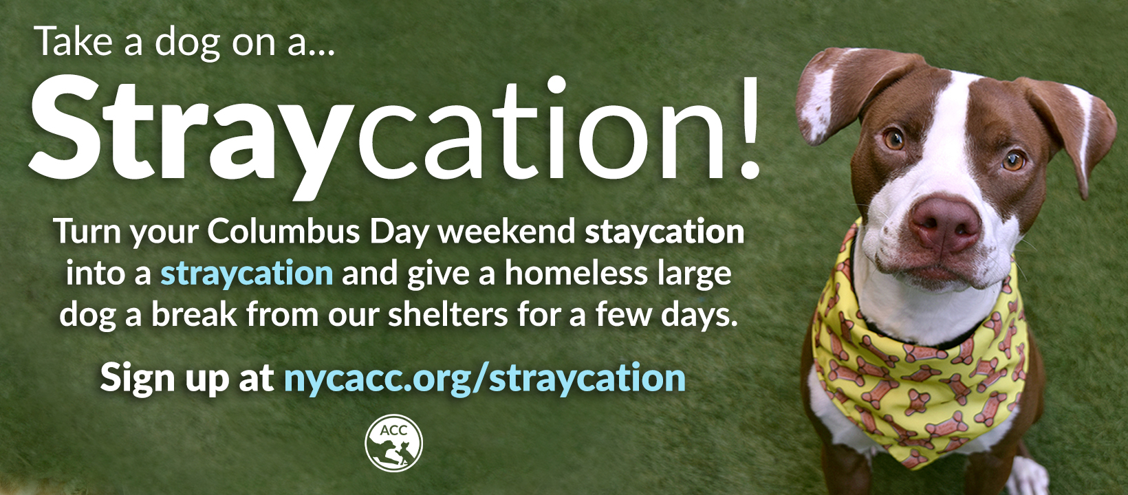 straycation columbus day website banner.jpg